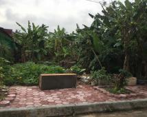 Bán đất mặt tiền 15,5m dài 31m khu phân lô Trung Dũng, Đồ Sơn